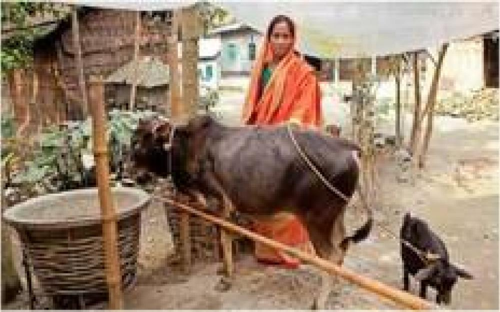 Pabna Meat - Inclusive Beef Supply Chain in Bangladesh